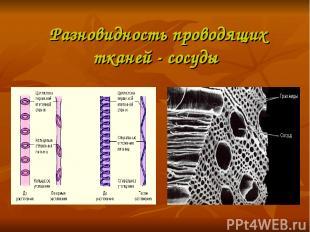 Разновидность проводящих тканей - сосуды
