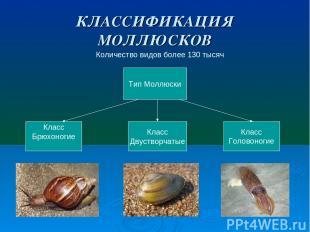 КЛАССИФИКАЦИЯ МОЛЛЮСКОВ Количество видов более 130 тысяч Тип Моллюски Класс Брюх