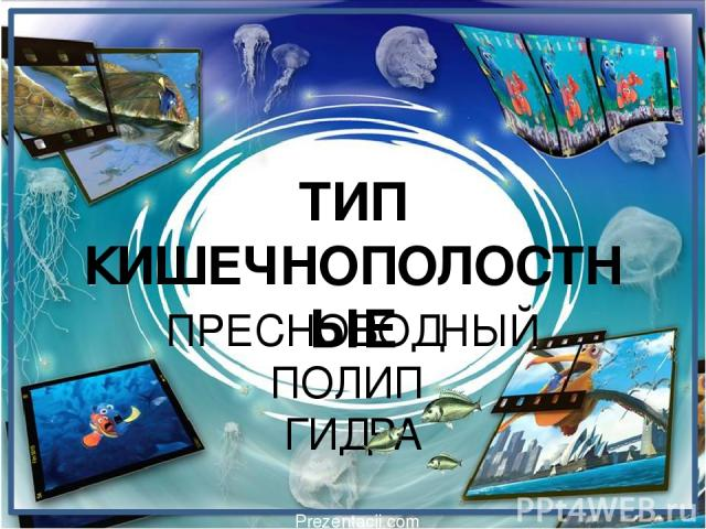 ТИП КИШЕЧНОПОЛОСТНЫЕ ПРЕСНОВОДНЫЙ ПОЛИП ГИДРА Prezentacii.com