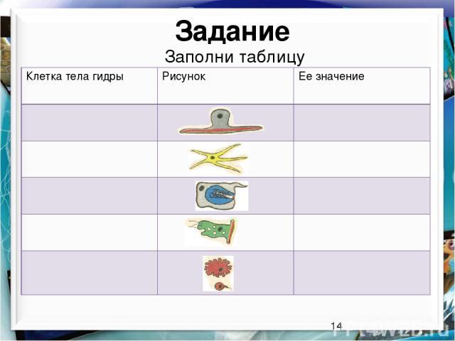 Задание Заполни таблицу Клетка тела гидры Рисунок Ее значение