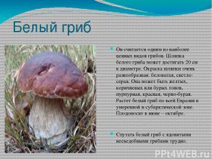 Белый гриб Он считается одним из наиболее ценных видов грибов. Шляпка белого гри