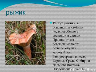 рыжик Растут рыжики, в основном, в хвойных лесах, особенно в сосновых и еловых.