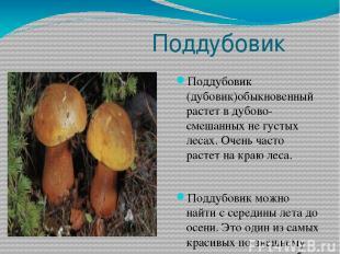 Поддубовик Поддубовик (дубовик)обыкновенный растет в дубово-смешанных не густых