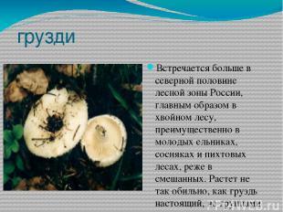 грузди Встречается больше в северной половине лесной зоны России, главным образо