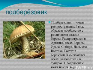 подберёзовик Подберезовик — очень распространенный вид, образует сообщество с ра