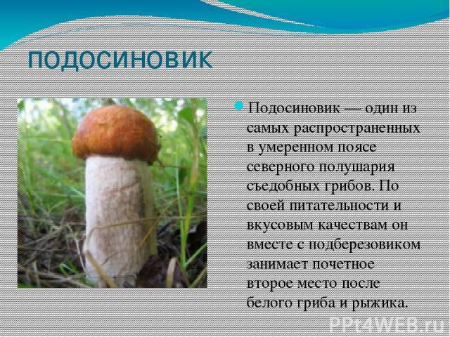 подосиновик Подосиновик — один из самых распространенных в умеренном поясе северного полушария съедобных грибов. По своей питательности и вкусовым качествам он вместе с подберезовиком занимает почетное второе место после белого гриба и рыжика. Подос…