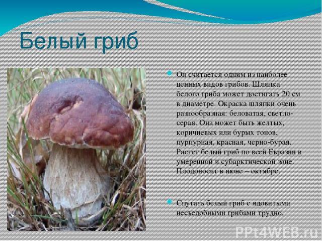 Белый гриб Он считается одним из наиболее ценных видов грибов. Шляпка белого гриба может достигать 20 см в диаметре. Окраска шляпки очень разнообразная: беловатая, светло-серая. Она может быть желтых, коричневых или бурых тонов, пурпурная, красная, …