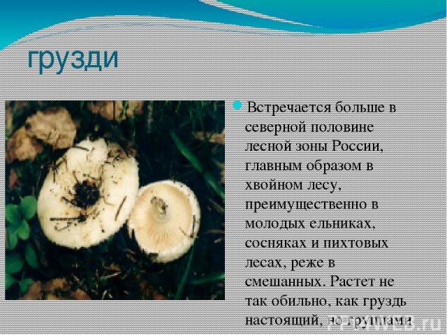 грузди Встречается больше в северной половине лесной зоны России, главным образом в хвойном лесу, преимущественно в молодых ельниках, сосняках и пихтовых лесах, реже в смешанных. Растет не так обильно, как груздь настоящий, но группами с июля, чаще …