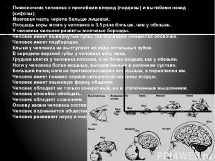 Позвоночник человека с прогибами вперед (лордозы) и выгибами назад (кифозы). Моз