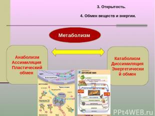 3. Открытость. 4. Обмен веществ и энергии. Метаболизм Анаболизм Ассимиляция Плас