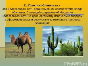 11. Приспособленность - это целесообразность организмов, их соответствие среде о