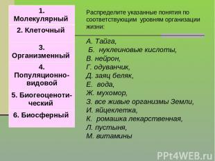 Распределите указанные понятия по соответствующим уровням организации жизни: А.