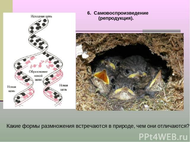 6. Самовоспроизведение (репродукция). Какие формы размножения встречаются в природе, чем они отличаются?