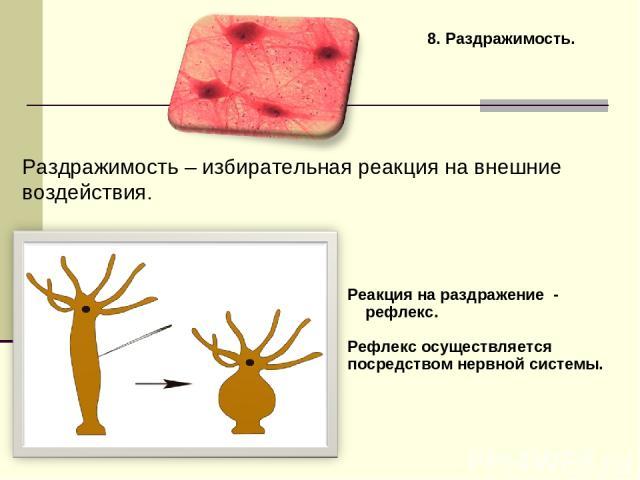 8. Раздражимость. Раздражимость – избирательная реакция на внешние воздействия. Реакция на раздражение - рефлекс. Рефлекс осуществляется посредством нервной системы.
