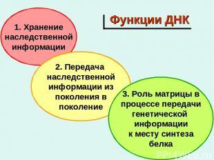 Функции ДНК 1. Хранение наследственной информации 2. Передача наследственной инф
