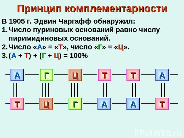 Принцип комплементарности В 1905 г. Эдвин Чаргафф обнаружил: Число пуриновых оснований равно числу пиримидиновых оснований. Число «А» = «Т», число «Г» = «Ц». (А + Т) + (Г + Ц) = 100%