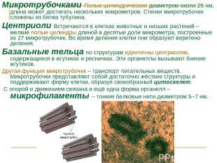 Микротрубочками Полые цилиндрические диаметром около 25нм, длина может достигат