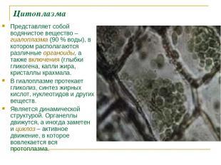 Цитоплазма Представляет собой водянистое вещество – гиалоплазма (90% воды), в к
