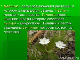 Цветок – орган размножения растений, в котором развиваются семена. Пестик – женс