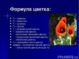 Формула цветка: Ч – чашечка, Л – лепестки, Т – тычинка, П – пестик, 1 – неправил