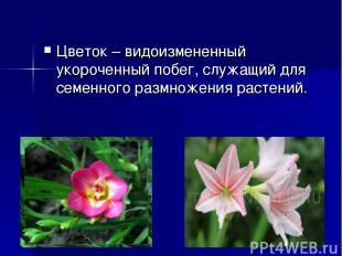 Цветок– видоизмененный укороченный побег, служащий для семенного размножения ра