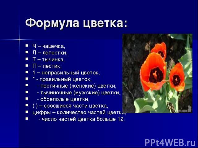 Формула цветка: Ч – чашечка, Л – лепестки, Т – тычинка, П – пестик, 1 – неправильный цветок, * - правильный цветок,  - пестичные (женские) цветки,  - тычиночные (мужские) цветки,  - обоеполые цветки, ( ) – сросшиеся части цветка, цифры – колич…