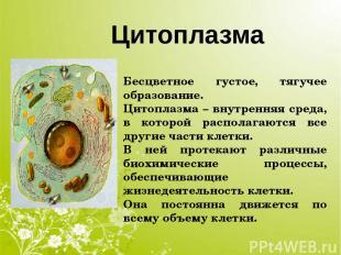 Цитоплазма Бесцветное густое, тягучее образование. Цитоплазма – внутренняя среда