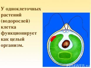 У одноклеточных растений (водорослей) клетка функционирует как целый организм.