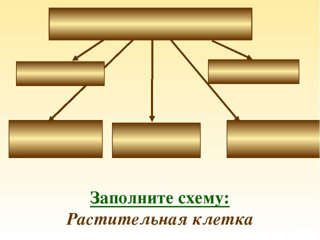 Заполните схему: Растительная клетка
