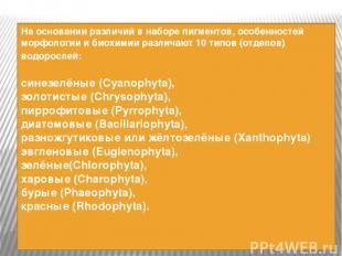 На основании различий в наборе пигментов, особенностей морфологии и биохимии раз