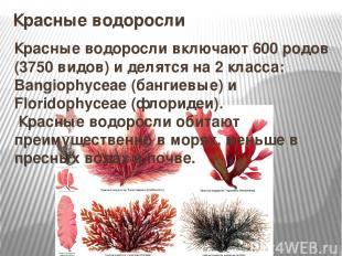 Красные водоросли Красные водоросливключают 600 родов (3750 видов) и делятся на