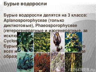Бурые водоросли Бурые водоросли делятся на 3 класса: Aplanosporophyceae (только