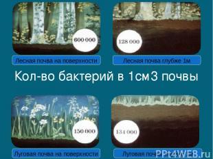 Кол-во бактерий в 1см3 почвы Лесная почва на поверхности Лесная почва глубже 1м