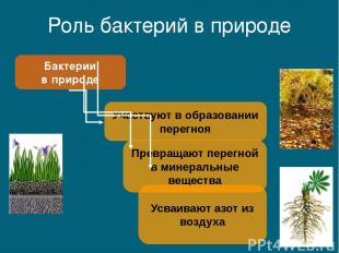 Роль бактерий в природе Бактерии в природе Участвуют в образовании перегноя Прев
