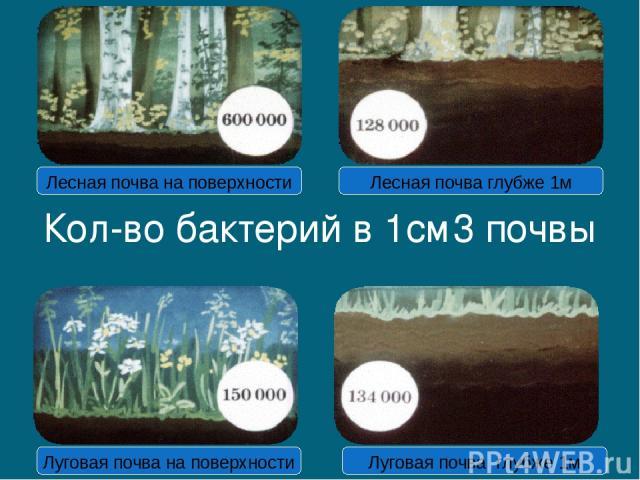 Кол-во бактерий в 1см3 почвы Лесная почва на поверхности Лесная почва глубже 1м Луговая почва на поверхности Луговая почва глубже 1м