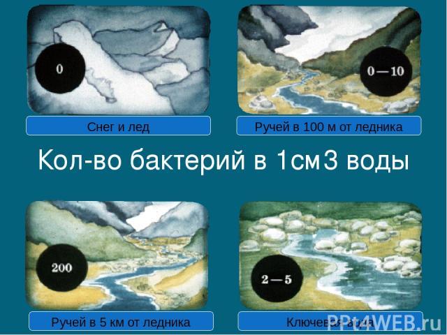 Кол-во бактерий в 1см3 воды Снег и лед Ручей в 100 м от ледника Ручей в 5 км от ледника Ключевая вода