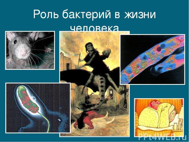Роль бактерий в жизни человека