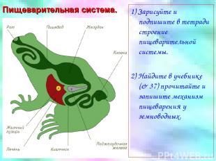 Пищеварительная система. 1) Зарисуйте и подпишите в тетради строение пищеварител
