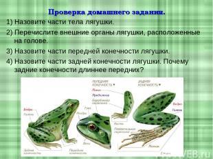 Проверка домашнего задания. 1) Назовите части тела лягушки. 2) Перечислите внешн