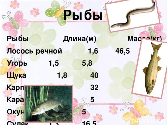 Рыбы  Рыбы Длина(м) Масса(кг) Лосось речной 1,6 46,5 Угорь 1,5 5,8 Щука 1,8 40 Карп 1,2 32 Карась 0,5 5 Окунь 0,6 5 Судак 1,3 16,5
