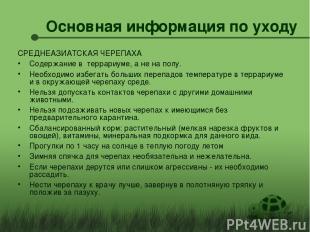 Основная информация по уходу СРЕДНЕАЗИАТСКАЯ ЧЕРЕПАХА Содержание в террариуме, а