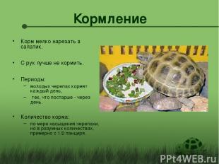 Кормление Корм мелко нарезать в салатик. С рук лучше не кормить. Периоды: молоды