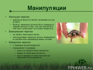 Манипуляции Фиксация черепах: довольна проста и может проводиться как угодно; Ва