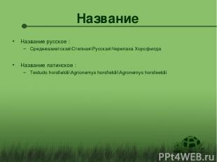 Название Название русское : Среднеазиатская\Степная\Русская\Черепаха Хорсфилда Н