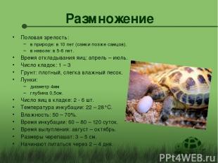 Размножение Половая зрелость: в природе: в 10 лет (самки позже самцов). в неволе