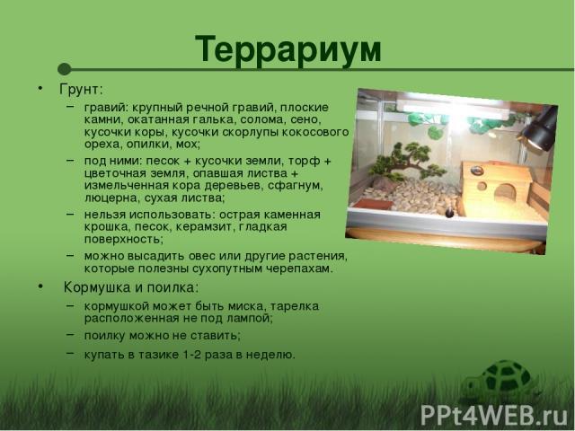 Террариум Грунт: гравий: крупный речной гравий, плоские камни, окатанная галька, солома, сено, кусочки коры, кусочки скорлупы кокосового ореха, опилки, мох; под ними: песок + кусочки земли, торф + цветочная земля, опавшая листва + измельченная кора …
