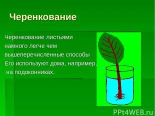 Черенкование Черенкование листьями намного легче чем вышеперечисленные способы Е