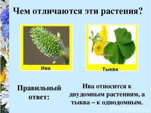 Ива Чем отличаются эти растения? Тыква Правильный ответ: Ива относится к двудомн