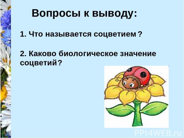 Вопросы к выводу: 1. Что называется соцветием ? 2. Каково биологическое значение соцветий ?