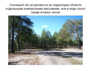 Сосновый лес встречается на территории области отдельными компактными массивами,